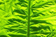 Pflanze am Wegesrand